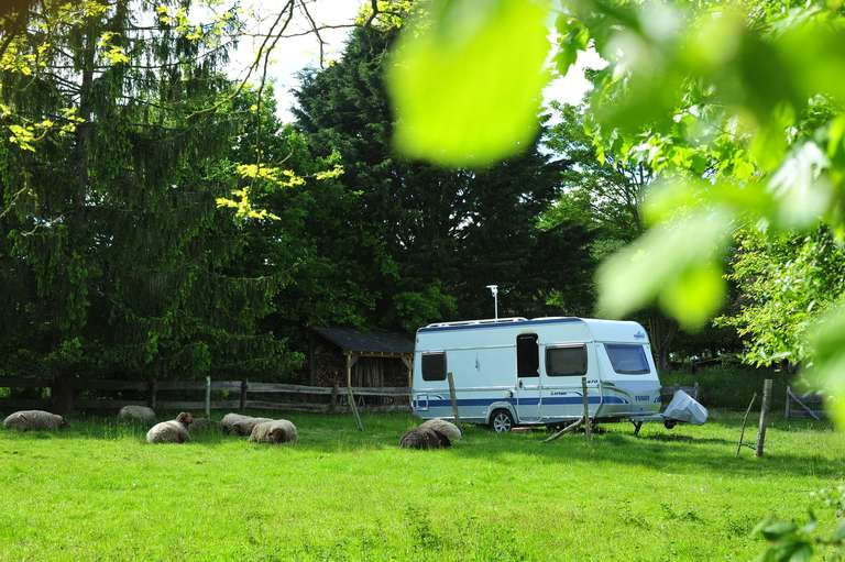 The ewes watch over the caravan