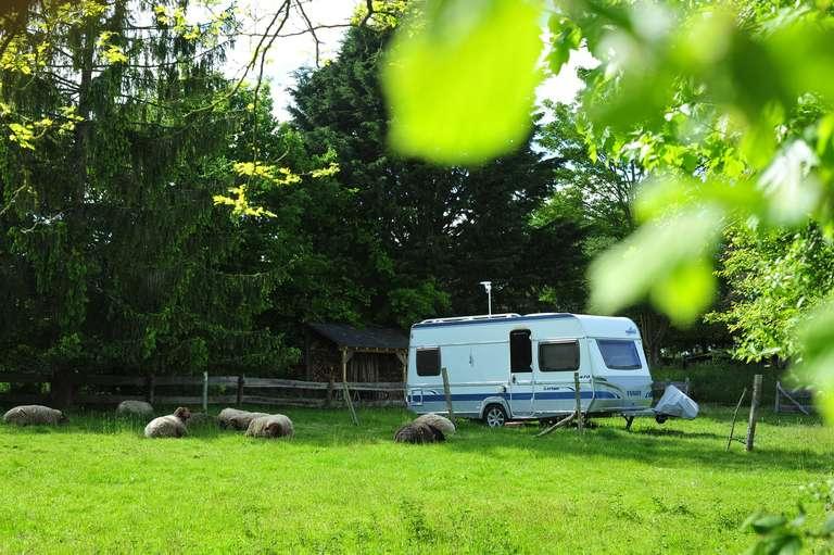 Die Schafe bewachen den Wohnwagen