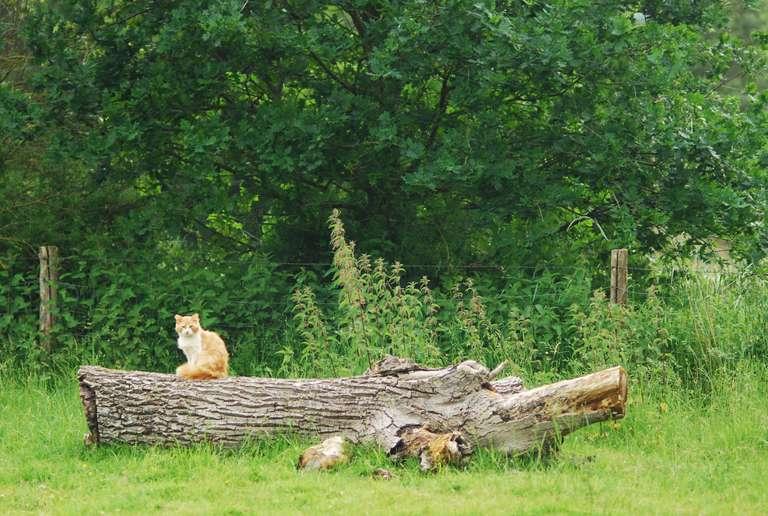 Chat dans le parc des moutons