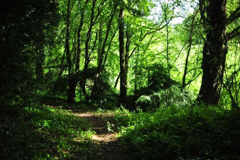 Dans le bois de la Bouëxière
